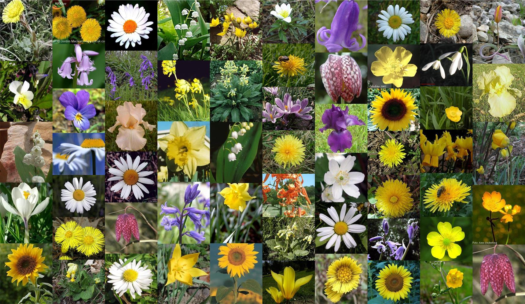 Image Collage of flower data set