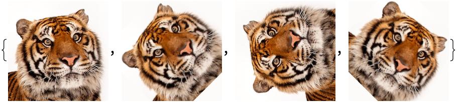 tiger list